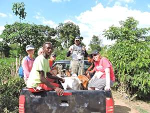 Delivering goats - yes, they rode in the truck with us!